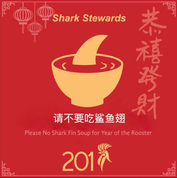 shark fin CNY