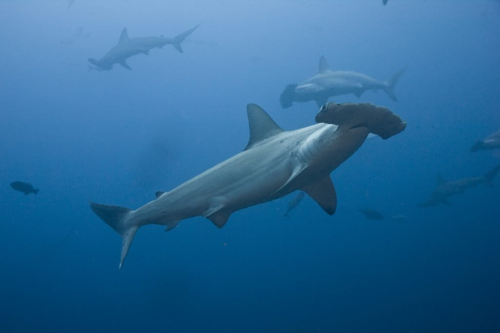 US Shark Fin Sales Elimination Act