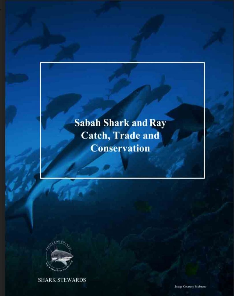 shark and ray report