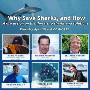 IOFF - Shark Conservation Q&A Graphic