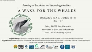 Wake for whales