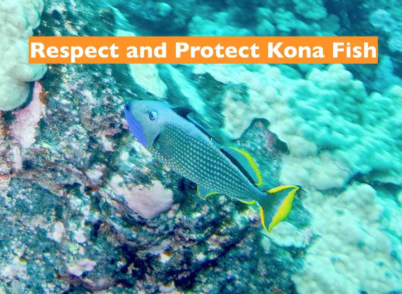 Respect Fish