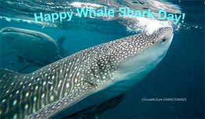 Whale-shark-Day